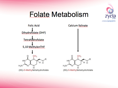 Folate_Metabolism